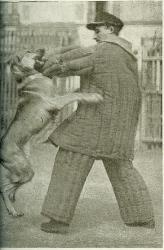 berger-d-alsace-etraignant-l-apache-1918.jpg