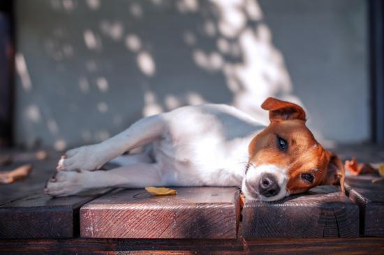 Fotolia 95685818 l chien couche banc