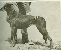 jugment-d-un-beauceron-1916.jpg