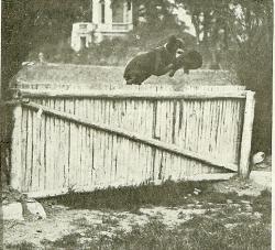 mab-berger-beauce-brevete-defense-et-pistage-1920.jpg