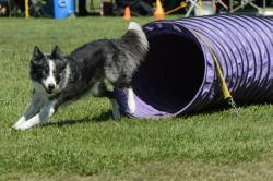 Photo chien agility 11