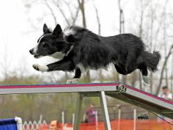 Photo chien agility 13