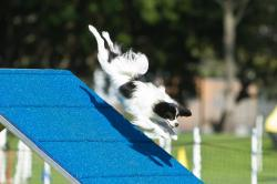 Photo chien agility 5