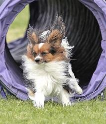 Photo chien agility 8