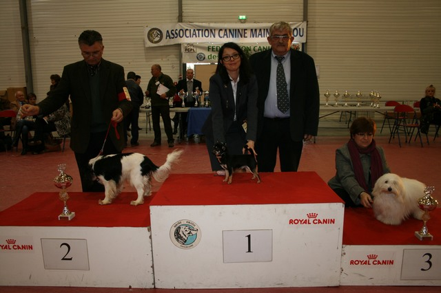 cacs 2012 072 25-11-2012