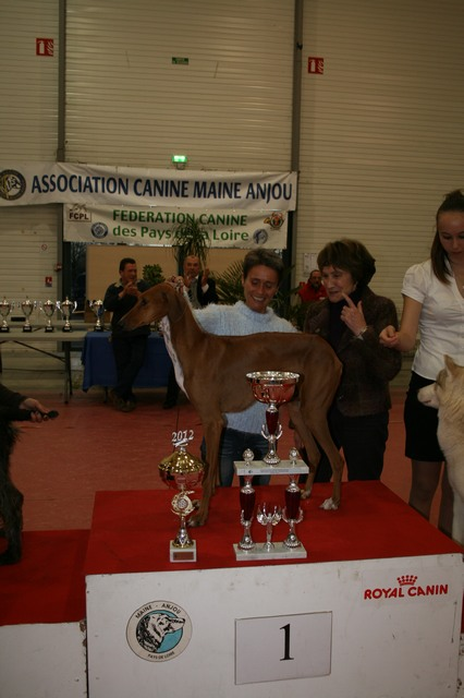 cacs 2012 086 25-11-2012